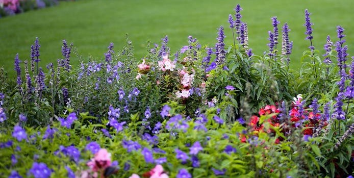 purple-flower-flower-border-lawn-garden-design_11848